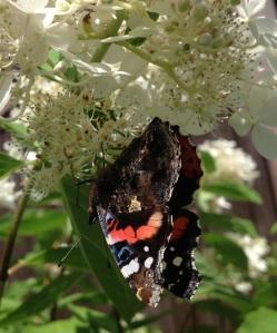 Haahtelan perhosvaikutus tuntuu.