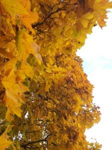 Rouva lehtorin tieteelliseen näkemykseen nojautuen ihmiskunnan elinkaari tulee olemaan lyhyt. Kasveja puolestaan on ollut ennen ja tulee olemaan jälkeenkin. Kasvien uusituminen jatkuu vuodenkierron mukaan, kuten syksyllä lepovaiheeseen siirtyminen.
