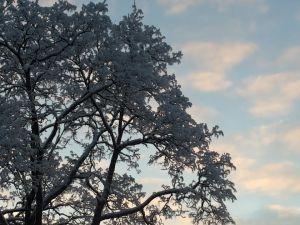Hyvän kirjan kanssa on jalat maassa ja pää pilvissä; on avaruutta, mutta myös kirpeyttä, juurevuutta ja sulavuutta.