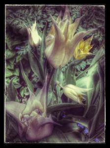 Pahan kukkia...