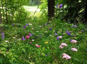 Heinäkuun lopun kukkaniity