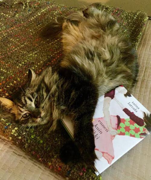 """Kuvan valitsin novellin """"Kissan yksityisyys"""" kunniaksi."""