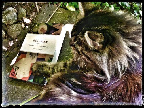 Hän antoi kissansa puolesta mitä kiittävimmät suositukset, selitti tunteneensa sen viisi vuotta [tosin kuvan Alma s. 30.7.2014] eli siitä pitäen kun se oli pentu, meni siitä takuuseen kuin omasta itsestään ja todisti, ettei kissaa oltu koskaan tavattu mistään pahanteosta eikä se milloinkaan ollut käynyt Moskovassa.