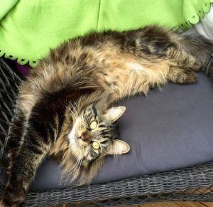 P.S. Tämä kissa päivittää blogia Alman runot. Blogin kaksi lukijaa ei riitä someilmiöksi.
